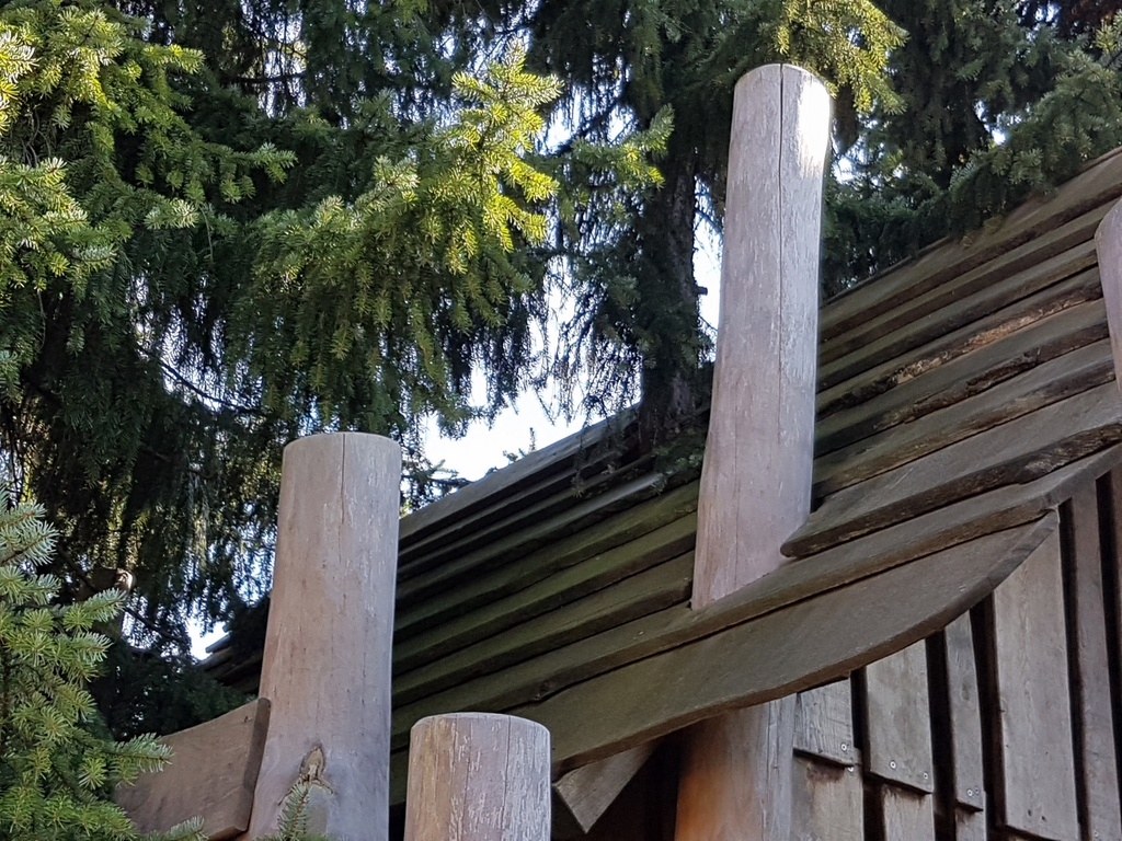 Steht da ein Baum im Baumhaus?