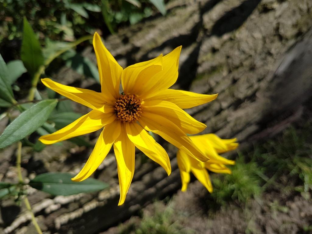 Wir haben viele Blumen und auch Gemüse im Kitagarten